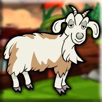 G2J Barbari Goat Rescue