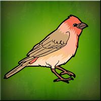 G2J House Finch Escape