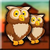 G2J Little Owl Escape