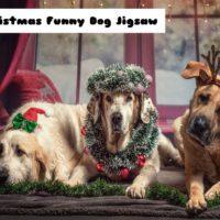 Christmas Funny Dog
