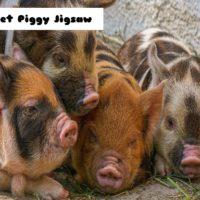 Piglet Piggy