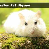 G2M Hamster Pet