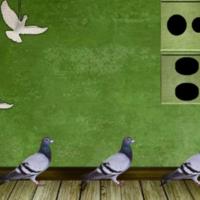 8b Pigeon Escape 2