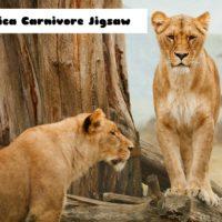 G2M Africa Carnivore Jigs…