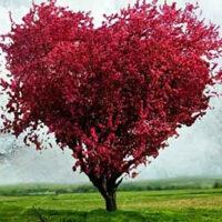 G2R-Dream Heart Forest Es…