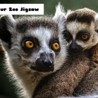 G2M Lemur Zoo Jigsaw
