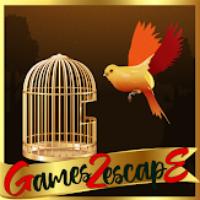 G2E Orange Parakeet Rescu…