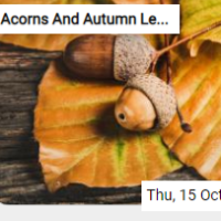Acorns And Autumn Leaves …
