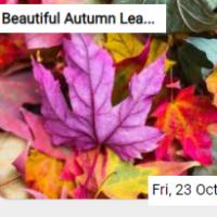 Beautiful Autumn Leaves Jigsaw