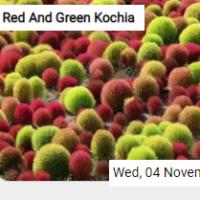 Red And Green Kochia Jigs…