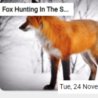 Fox Hunting In The Snow J…