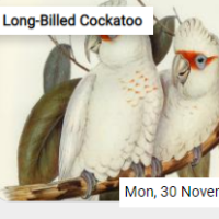 Long-Billed Cockatoo Jigsaw