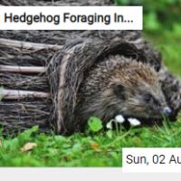 Hedgehog Foraging In The Grass Jigsaw