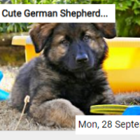 Cute German Shepherd Puppy Jigsaw