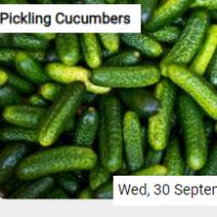 Pickling Cucumbers Jigsaw