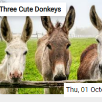 Three Cute Donkeys Jigsaw