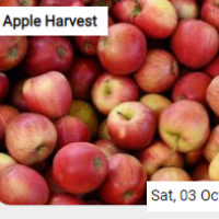 Apple Harvest Jigsaw