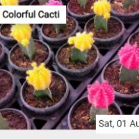Colorful Cacti Jigsaw