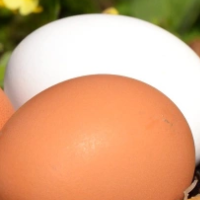 Eggs In A Wicker Basket