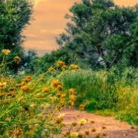 Path Through A Grassy Mea…