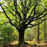 G2R BIG-Seeking Forest House HTML5