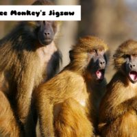 G2M Three Monkey's Jigs…
