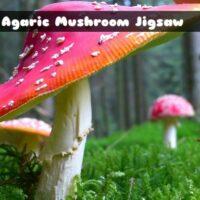 G2M Fly Agaric Mushroom
