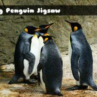 G2M King Penguin